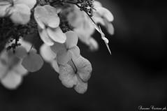 (LaKry*) Tags: blackandwhite biancoenero schwarzundweiss schwarzundweis grey grau grigio gartenderwelt berlin berlino fiore flower blum nature natura