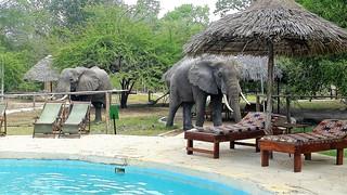 Africa Safari Selous visitors
