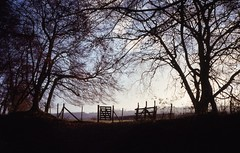 Late on a WInter Day (cycle.nut66) Tags: contax 139 quartz distagon 3528 carl zeiss kodak ektachrome 100 scan analogue epson 4490 scanner winter afternoon lacework trees branches twigs fence gate horizon sunlight chiltern hills chilterns