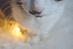 See you in heaven... (Maria Godfrida) Tags: bubbles bubbels cat fauna bokeh closeup macro nose whiskers remembrance light