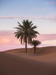 Desert Sunset (Markus Jansson) Tags: palm palmtree desert sahara sunset morocco landscape nature sky