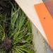 Translucent Orange