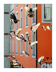 flutter of pigeons in the sun (overthemoon) Tags: switzerland suisse schweiz svizzera romandie vaud lausanne riponne arlaud birds pigeons movement windows orange graffiti urban phone frame utatafrontpage