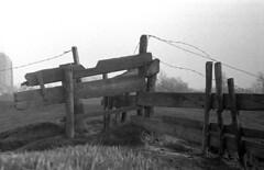 1975: barbed wire (doc(q)man) Tags: fence gate barbedwire wood decay pole wire metal dike seadike veere walcheren zeeland netherlands grass landscape board docman predigital