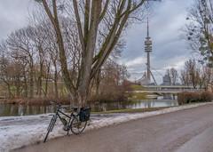 2019 Bike 180: Day 9, January 27 (suzanne~) Tags: 2019bike180 bike winter snow olympicpark munich bavaria germany tree televisontower lake bmwbuilding treemendoustuesday tmt