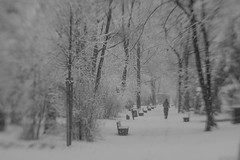 Happy Bench-in-the-Snow Monday! (suzanne~) Tags: bench park cemetery tree snow winter alternordfriedhof munich bavaria germany walker jogger lensbaby sol45