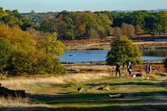 View of Upper Pen Pond, 3pm (Johnchess) Tags: richmondpark 2november2018 fridaybirdgroup