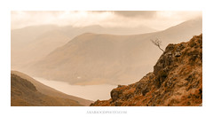 Outpost (Amar Sood) Tags: amarsoodphotocom amarsoodphotography haystacks lakedistrict thelakedistrict nationalpark mountains buttermere tree lonetree panoramic landscape landscapes sony a7rii nikkor 247028
