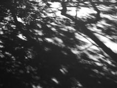 shadow (link~) Tags: shadow sunlight trees