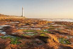 Slangkop Lighthouse in the late afternoon sunlight. Christine Phillips (Christine's Phillips (Christine's observations) - ) Tags: green lighthouse sea coast rocks ships navigation nautical christinephillips seaweed sunset afternoon light soft warm nopeople horizontal colour color softlight noclouds clearsky