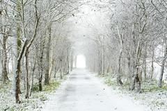 Merry Christmas (Ellen van den Doel) Tags: december natuur netherlands winter nature overflakkee nederland weer weather snow sneeuw 2017 landschap koud holland outdoor cold goeree landscape sommelsdijk zuidholland nl