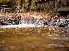 20181104-162204-052 (JustinDustin) Tags: 2018 attraction autumn blairsville fall ga georgia nga northamerica northgeorgia seasonal us usa unitedstates vogelstatepark year