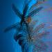 Crinoids on a Sea Fan