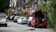 Alley Cat (Worthing Wanderer) Tags: thailand transport road lizard street bangkok everyday november