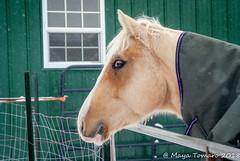 A day at the Ranch 09 (Maya Tomaro) Tags: maya tomaro horse royale equistrian centre ottawa ontario canada models model modeling