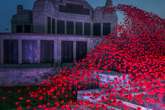 Lest We Forget (Rich Walker Photography) Tags: armedforces royalnavy navy airforce poppies poppy display plymouth devon