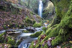 Craigie Linn Waterfall (rjonsen) Tags: waterfall river stream burn woods woodland park water long exposure tripod fall autumn