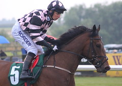 """Beasley C Connor Beasley on """"Dark Confident"""" at Catterick (Le Chat of Paris) Tags: beasley c connor darkconfident catterick"""