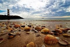 """La cavalcata delle """" conchiglie """" / The ride of the """" shells """" (Ivan Zanotti Photo) Tags: faro pourtugal portogallo algarve beach sea atlanticocean travel ilhadeserta"""