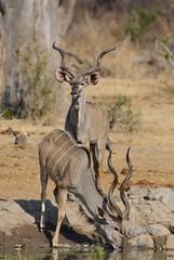 _DSC9327 (acomb) Tags: tanzania roadtrip ruaha tandala