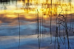 Sunset (Stefano Rugolo) Tags: stefanorugolo pentax k5 pentaxk5 smcpentaxm100mmf28 ricohimaging kmount sunset reflection reeds sky clouds bythelake lakeshore lakeside water abstract impression manualfocuslens manualfocus manual vintagelens primelens
