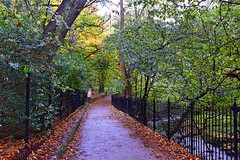 In the middle (Pictures in my head) Tags: scotland edinburgh edimbourg city new town explore discover nature lover history student friends park parc colours autumn fall leaves trees walk photography view landscape postcard photograpy beauty