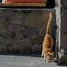 a cute red catte