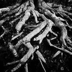 Roots thumbnail