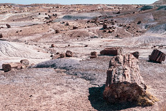 Lots of petrified wood logs in the sunshine of Petrified Forest National Park in Arizona (m01229) Tags: ancient rock dry sand nature painteddesert petrified mineral brown ground crystal united national southwest tree geology scenic outdoors america route66 wood geologic landscape desert natural nationalpark sky petrifiedforest formation fossil erosion petrifiedforestnationalpark clouds log drought terrain colorful scenery geological travel forest stone arizona fourcorners park usa tourism painted badlands