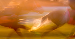 prêle au lever du soleil (JDS Fine Art Photography) Tags: horses training sunrise abstract artistic aesthetic cinematic horsetail soft pastel animal speed fast trainingride