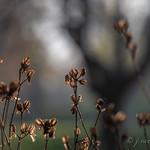 Nature ~ Huron River and Watershed, Michigan thumbnail