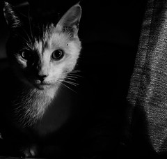 Oh Hi (Spacepeople13) Tags: cat kitty cute babyboy boy animal animals kitten black blackandwhite white dark shadows nikon nikkor d3300