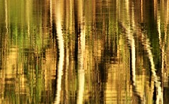Abstract Reflections in Quarry Lake, South Australia (Red Nomad OZ) Tags: adelaide southaustralia outdoor nature water tree reflection lake abstract texture blur