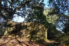 Pillbox on St Martha's Hill, Surrey 1 (Leimenide) Tags: pillbox defence wood britain england autumn world war ii st marthas hill surrey north downs way