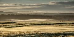 Low mist..xx (shona.2) Tags: scotland eastlothian golfers trees hills grass layers colours fog mist gullane golfcourse sunrise morning goldenhour