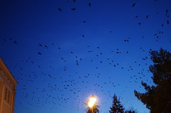 Invasion (Baubec Izzet) Tags: baubecizzet pentax birds nature light flickrunitedaward