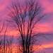 Autumn Sunset - Coucher de soleil d'automne