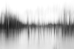seismic reflection (javan123) Tags: blur reflection trees forest water ice fujifilm monochrome bw