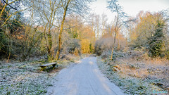 Wyken  Nature Reserve 23rd January 2019 (boddle (Steve Hart)) Tags: stevestevenhartcoventryunitedkingdomcanon5d4 wyken nature reserve 23rd january 2019 steve hart boddle steven bruce wyke road coventry united kingdon england great britain canon 5d mk4 2470mm standard wild wilds wildlife life natural bird birds flowers flower fungii fungus insect insects spiders butterfly moth butterflies moths creepy crawley winter spring summer autumn seasons sunset weather sun sky cloud clouds panoramic landscape