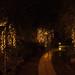 Golden Trees 6360