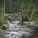 back in the wilderness - zurück in der Wildnis thumbnail