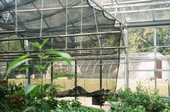 line_6 (acylay) Tags: 35mm 35mmfilm filmphotography analog greenhouse horticulture plants
