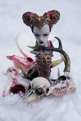 Bones at winter (Emese's Dolls) Tags: dollchateau doll bjd grey medeas bones skull