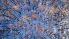 Winter Afternoon (bill.d) Tags: dji djiphantom4advanced kalhaventrail kalamazoo kalamazoocounty michigan unitedstates aerialphotography drone field flying forest outdoor park path snow trail tree winter woods us