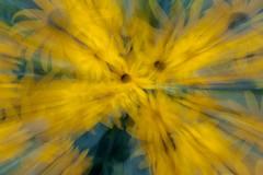 Flusion (Rocky Pix) Tags: flusion zoom action shots flowers longmontsmemorialrosegarden longmont boulder county colorado rockies rockypix rocky mountain pix wmichelkiteley f22 1sec 200mm 70200mmf28gvr nikkor telezoom monopod