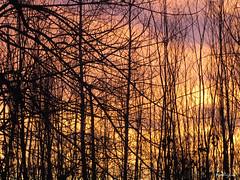 Autumn Sky - Ciel d'automne (monteregina) Tags: cloud dawn silhouette sky weather file:name=nb201711285697 sunset coucherdesoleil canada québec ciel clouds nuages trees arbres colors couleurs silhouettes monteregina sonnenaufgang leverdesoleil viertel himmel wolken automne fall autumn herbst patterns warmsky baretrees arbresnus