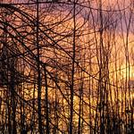 Autumn Sky - Ciel d'automne thumbnail
