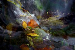 Autumn underwater (Ker Kaya) Tags: fall autumn leaves water underwater flow fast speed impressionism kerkaya kerkayaphotography artist art carlzeiss sony rx10 river nature