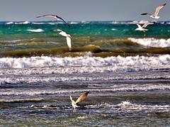 MOUETTES (OMAR-MALO) Tags: plage beach alger algerie algeria