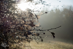 Autumn Haze IV (judithrouge) Tags: haze dust fog mist sun autumn fall leaves drops water contrejour morning light augsburg germany stadtwald morninglight nebel dunst sonne herbst blätter tropfen wasser gegenlicht deutschland morgenstimmung